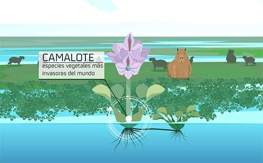 El Camalote. Junta de Extremadura